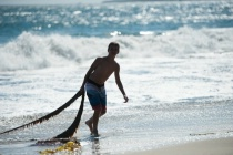 Young boy pulls Kelp out of the ocean.