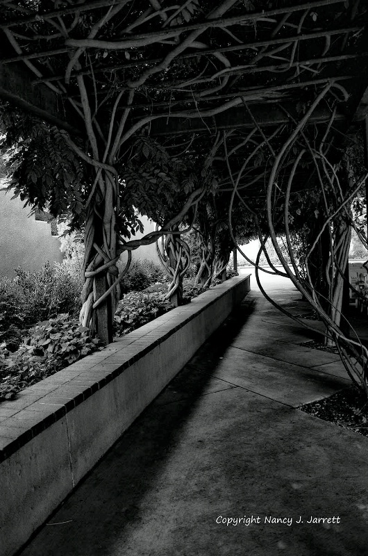 arbor in black and white image dsc8059