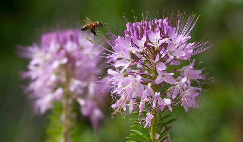 nectar s call image 1045