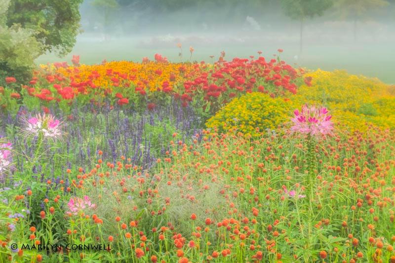 Floral Dream - ID: 14000360 © Marilyn Cornwell