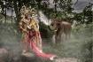Patara Elephant F...