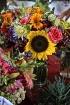 Sunflower Surroun...