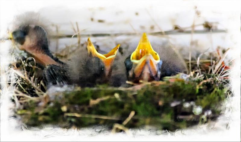 Baby Sparrows - ID: 14008884 © Grace Newsom