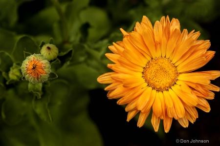 Cloister Flower