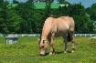 Kentucky Horse Pa...