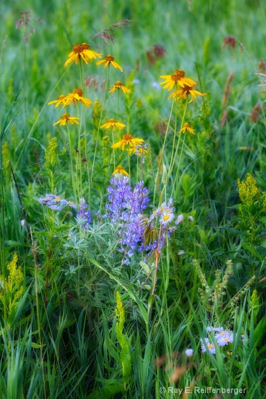 h0c0310 Flower13 - ID: 14024299 © Raymond E. Reiffenberger