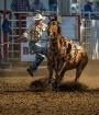 Working Horse- Ti...