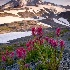 © Ron Heusser PhotoID# 14031920: Sunrise on Rainier