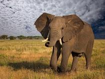 Elephant - Sky Replaced