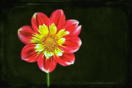 Red flower - 2