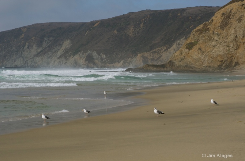 Seagulls on McClures Beach - ID: 14056853 © Jim Klages