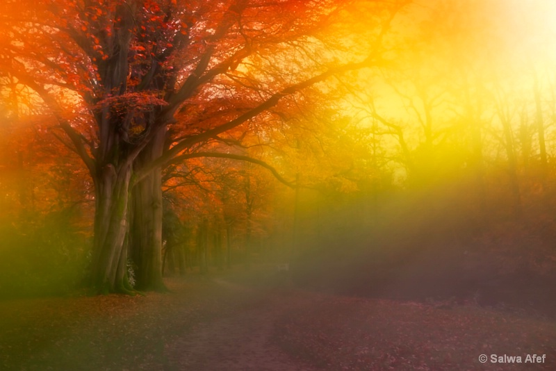 Nature On Fire