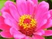 Pretty pink flowe...