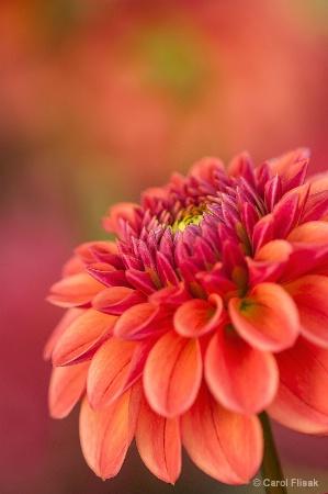 Deep Pink to Amber Orange
