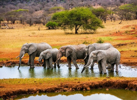 Watering Hole