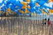 beach balloons bu...