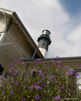 Flowers at the Lighthouse