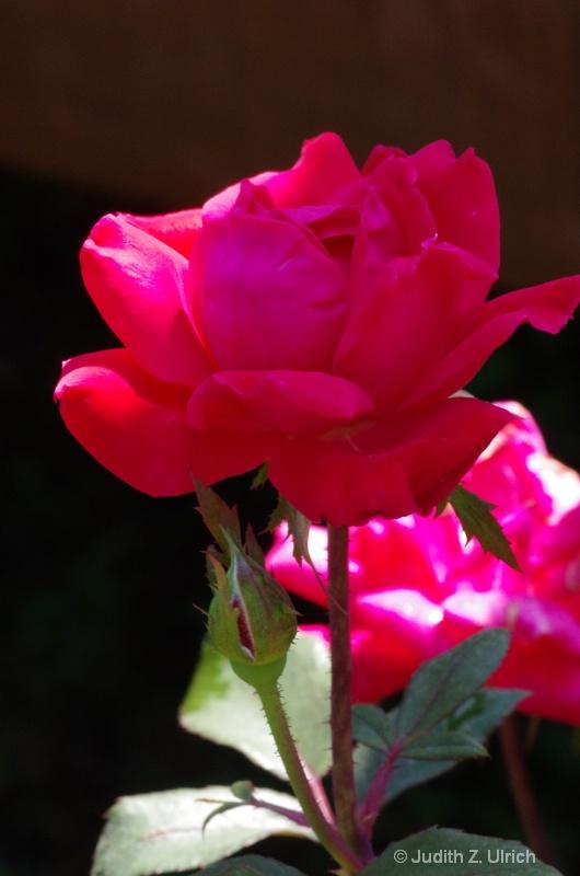 Rosy Portrait