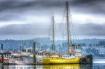 Misty Port Orchar...