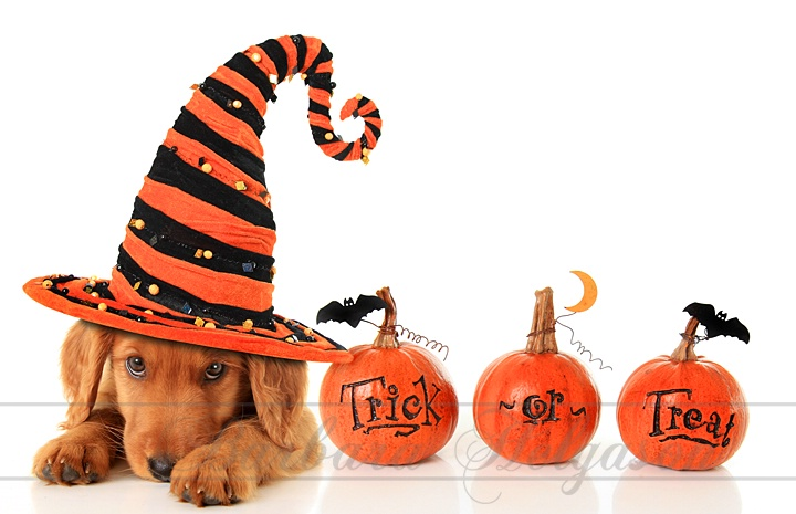 Trick or treat puppy