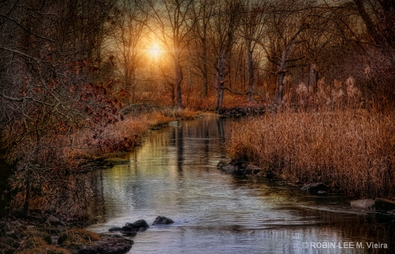Gilded Brook