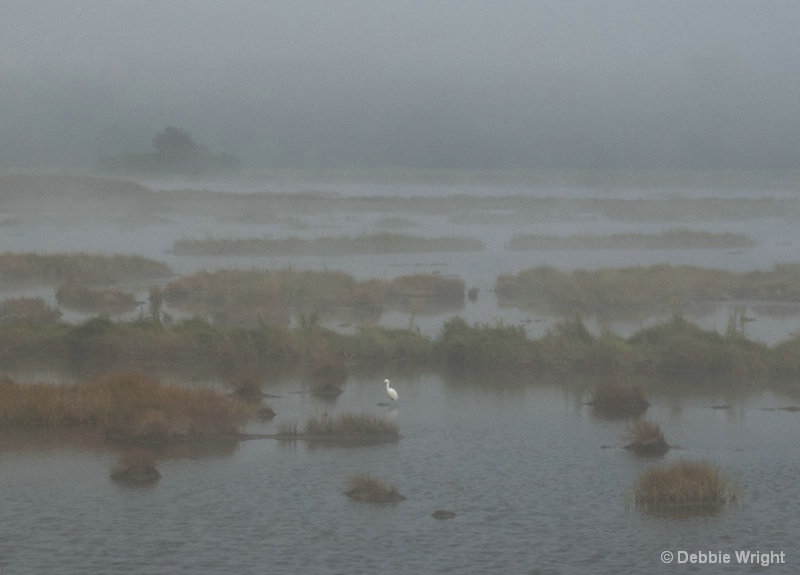 Foggy Marsh - ID: 14124867 © deb Wright