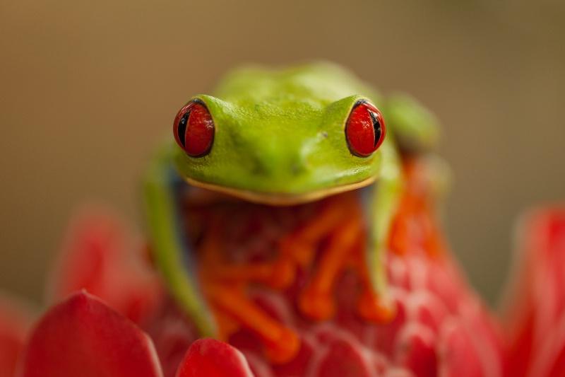 Big Red Eyes