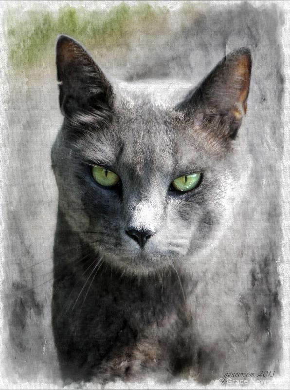 Barn Cat - ID: 14135434 © Grace Newsom