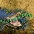 © Michael Stern PhotoID # 14135589: alligator-bite-satur-2