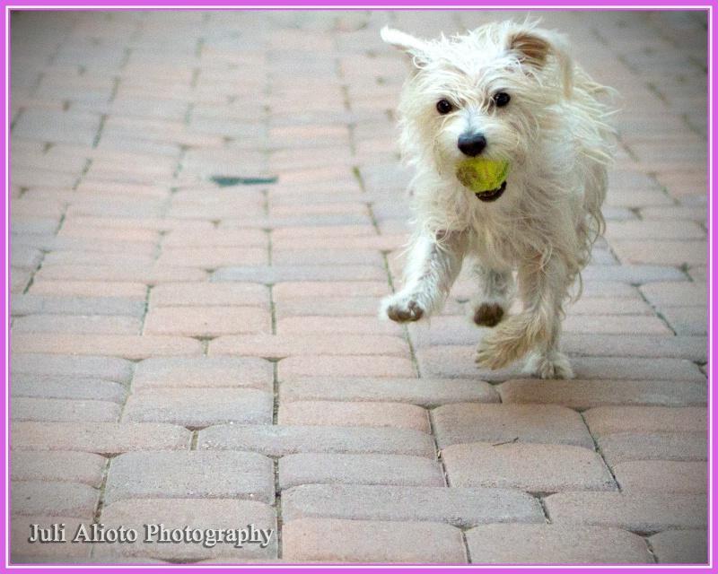 Happy Puppy - ID: 14139093 © Juli A. Alioto