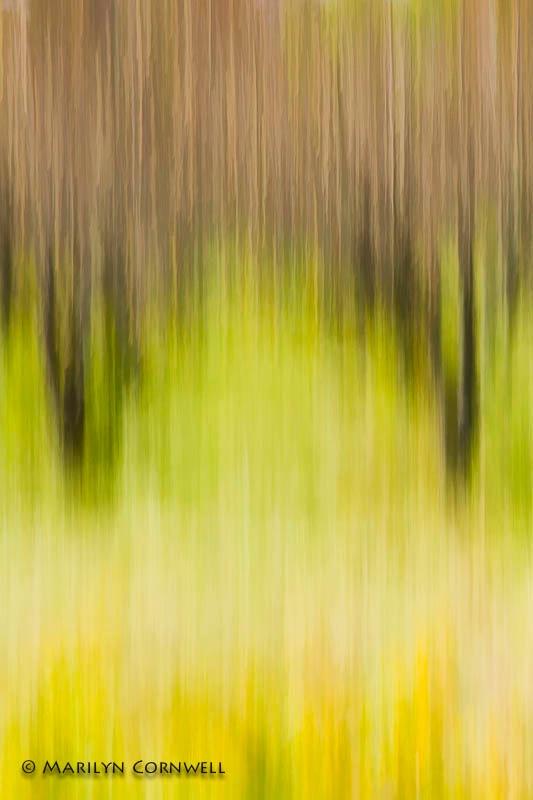 Autumn Orchard - ID: 14139596 © Marilyn Cornwell