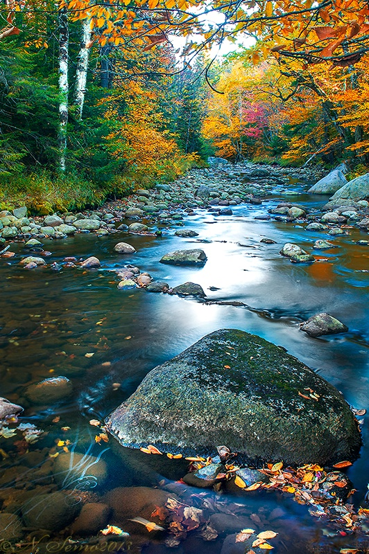 Autumn on the Moose River