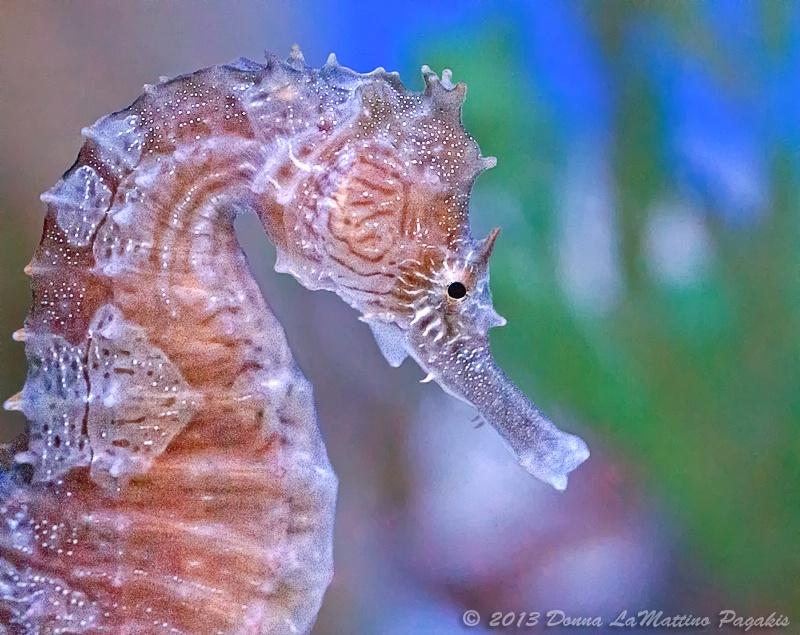 Tiny Seahorse