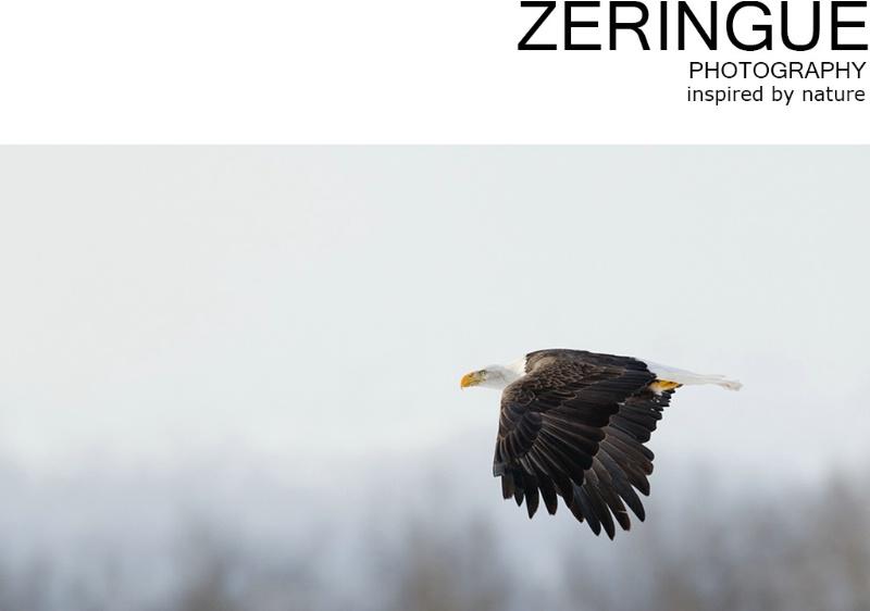 Welcome to zeringuephoto.com