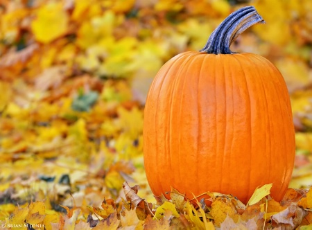 Pumpkin Portrait