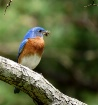 Mr. Blue Bird
