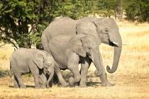 Elephants 3 G 2013
