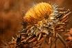 Autumn Artichoke