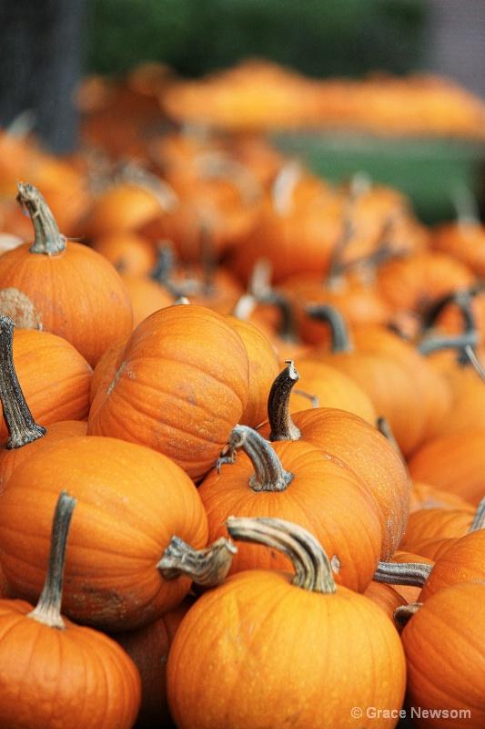 Pumpkin Patch - ID: 14184598 © Grace Newsom