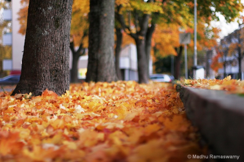 Fall season in Sandviken