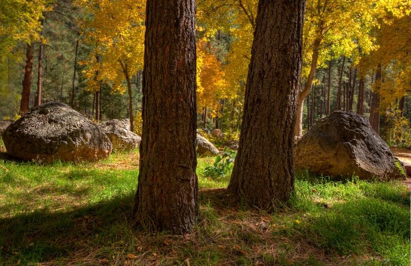 A Peek at Autumn's Color