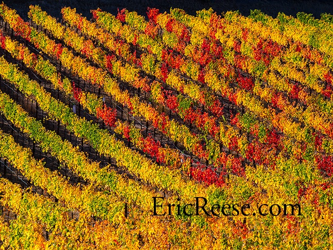 fall-vines - ID: 14197648 © Eric Reese