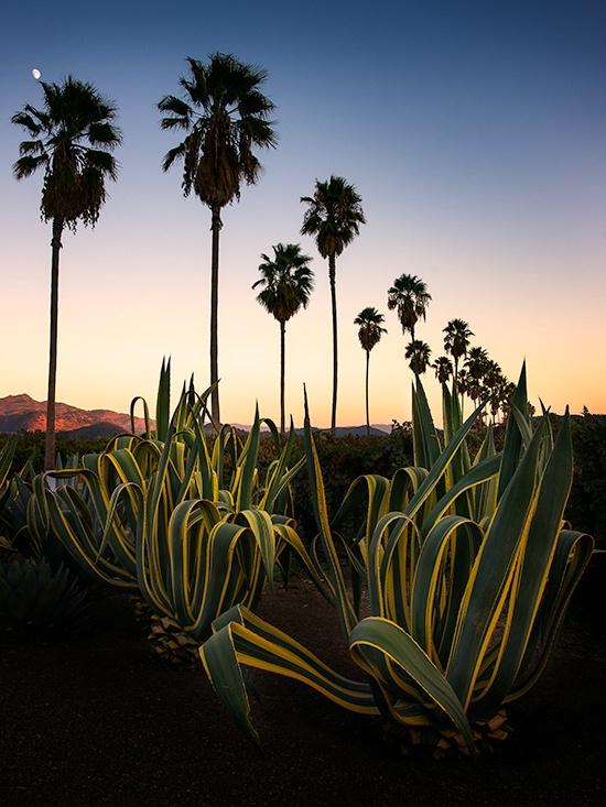 palm-row - ID: 14197653 © Eric Reese