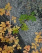 Stages of Fall (r...