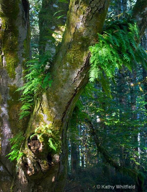 North Fork 22 - Chehalis, WA - ID: 14201771 © Kathy K. Whitfield