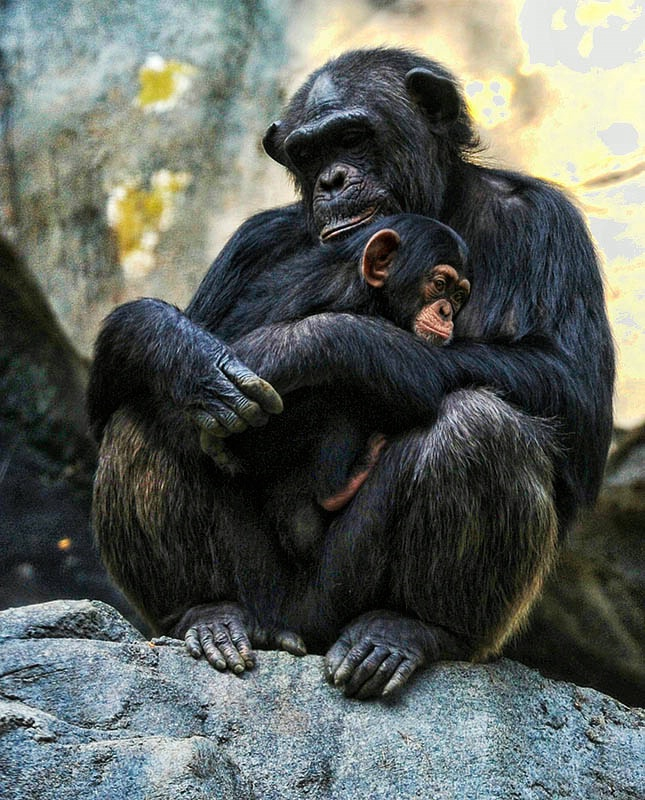 Mother's Arms Are Comfort