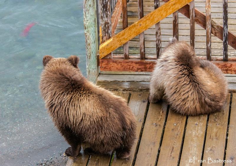 Brooks Lodge, Katmai National Park - ID: 14205779 © Fran  Bastress