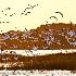 2Assateague Island, Virginia - ID: 14206027 © Fran  Bastress