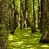 2Cypress Swamp, Mississippi - ID: 14206032 © Fran  Bastress