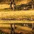 2Meadowlark Gardens, Vienna, Virginia - ID: 14206038 © Fran  Bastress